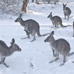 Canberra shivers through coldest April in nearly 70 years